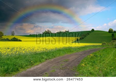 Yellow field rapeseed with blue sky and rainbow