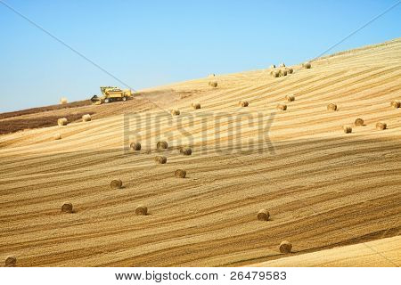 Beautiful golden hay bales on the field as background