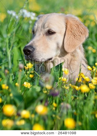 Portrait young dog playing in the meadow