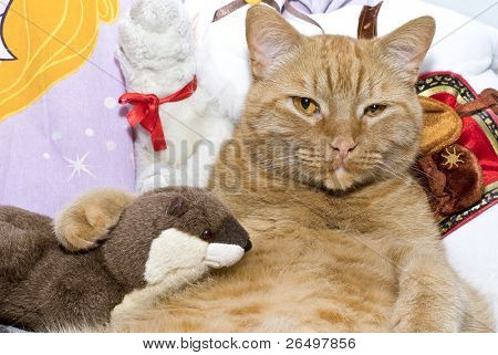 Fat orange cat with his toy otter.