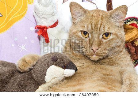 Fett orange Katze mit seinem Spielzeug-Otter.