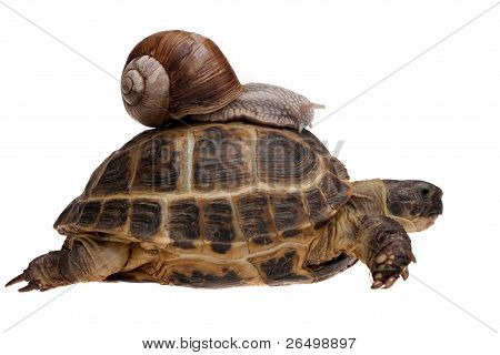 Snail On The Tortoise