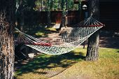 Hammock In Forest. Hammock Stretched Between Two Trees In The Forest. poster