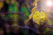 Hello November Nature Banner. Autumn Foggy Morning. City Lights Early In The Morning In The Fog. Ban poster