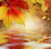stock photo of fall leaves  - Autumn leaves above the water as a backdrop - JPG