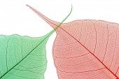 Colored leaf of detail on white background