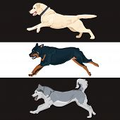 Running Dogs Collection For Your Design. Rottweiler, Labrador And Husky Dogs Are Running. Set Of Thr poster