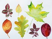 Watercolor autumn leaves. Fall foliage. Autumnal design. Seasonal decorative beautiful multi-colored poster