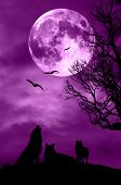 foto of wolf moon  - an horror night with wolves - JPG