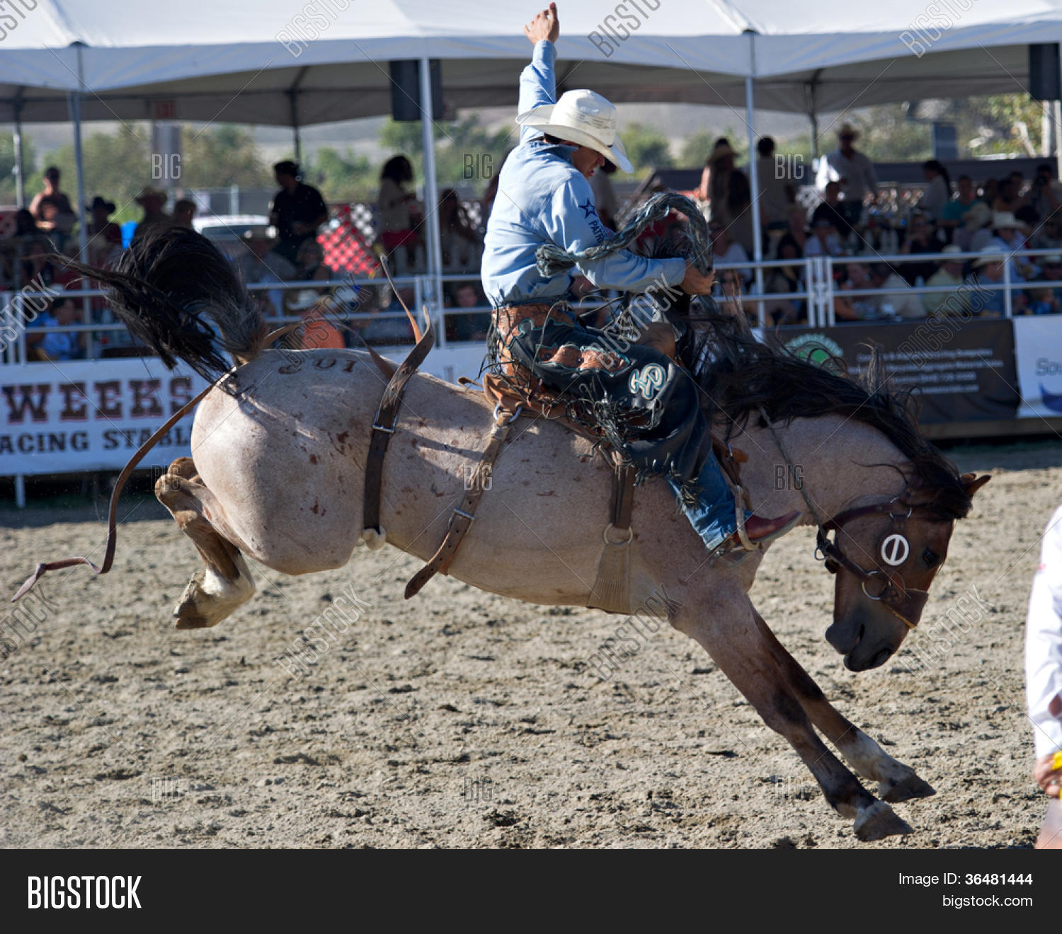 TGRA - A Texas Tradition Rodeo - TGRA - - vr. 1.0.0