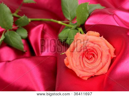 Beautiful rose on red cloth