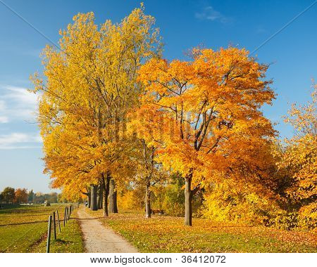 Colorful trees in the autumn park
