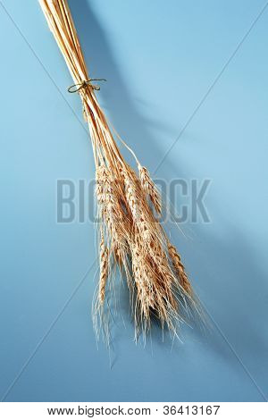 Sheaves of wheat on the Blue background