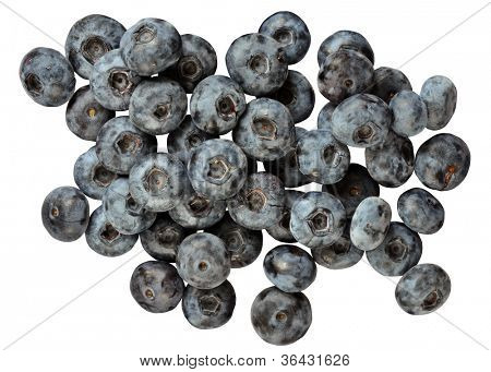 Vaccinium corymbosum fruits known as blue huckleberry. Group of berries isolated on white background.