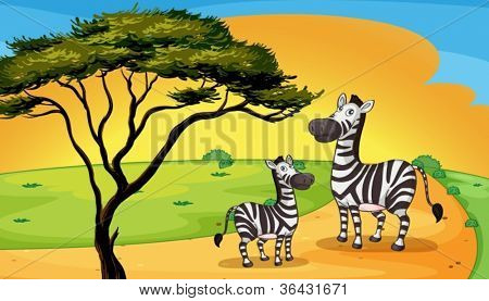 illustration of two zebra under the tree