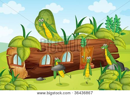 illustration of grasshopper and beautiful wooden house
