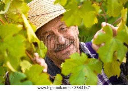 Happy Senior Vintner