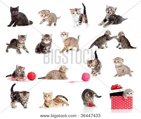 Adorable kittens collection. Little funny cats isolated on white.