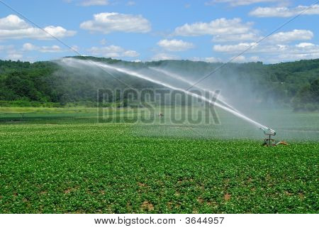 Irrigating Field