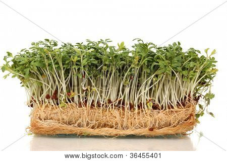 Fresh cress salad isolated on white