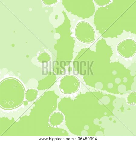 Bacterial colony