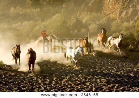 Sueño de vaqueros