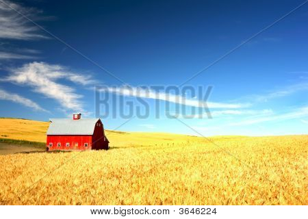 Red Barn In Wheat Field