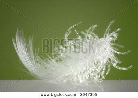 poster of Fluffy White Feather