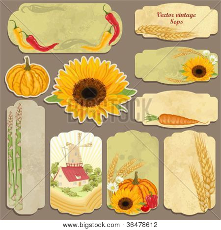 Set of vector vintage cards with vegetables, mill, sunflower and wheat ears