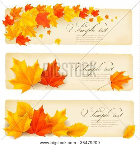 Three autumn banners with colorful leaves. Vector.