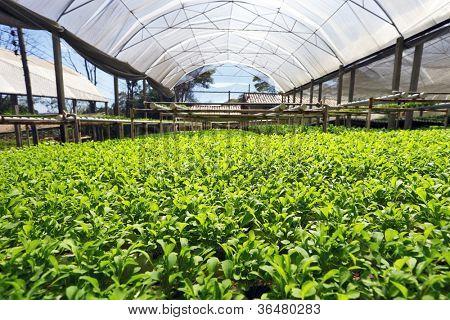 hydroponic plantation