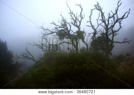Old spooky tree in a fog