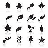 stock photo of marijuana leaf  - Leaf icon - JPG