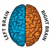 foto of right brain  - Left Brain - JPG