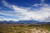 picture of canaima  - Flat - JPG