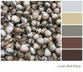Cockle shell background colour palette with complimentary swatches.