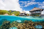 foto of french polynesia  - Beautiful above and underwater landscape of Moorea island in French Polynesia - JPG