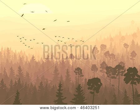 Wild Birds In Coniferous Wood In Morning Fog.