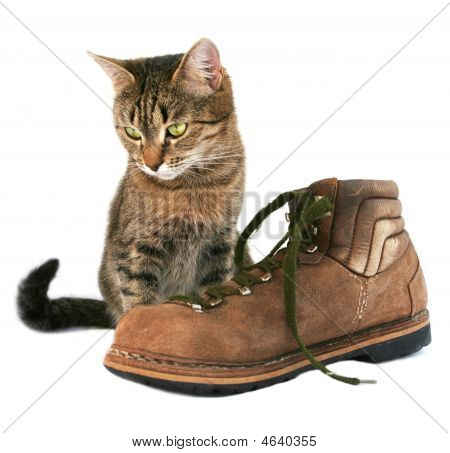 Cat And Boot