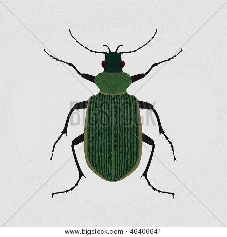 Green beetle , eps10 vector format