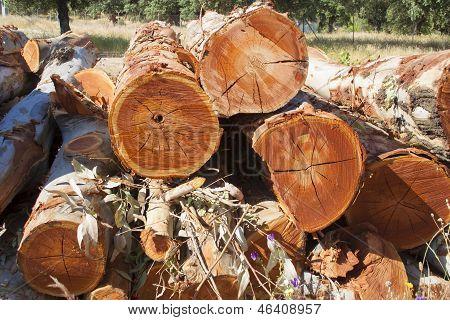 Trees Cut Wooden Logs, Tree Trunk,
