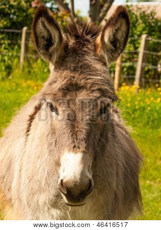 Nice Donkey In A Field In Sunny Day