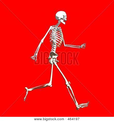 Bone  254