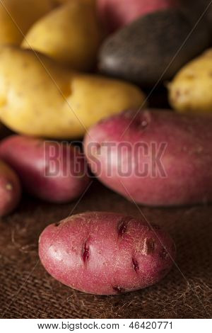 Raw Organic Fingerling Potato Medley