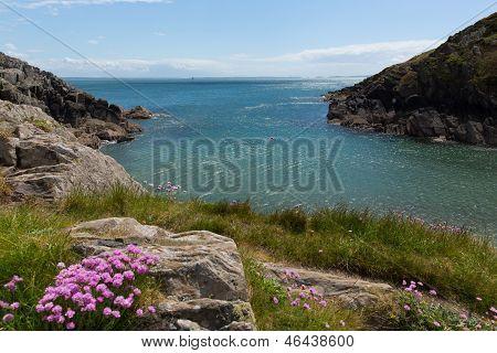 Porthclais near St Davids Pembrokeshire West Wales harbour entrance