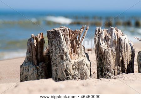 Baltic sea coast - wooden breakwaters closeup.