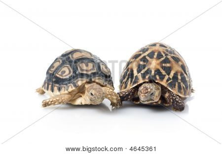 Indian Star & Leopard Tortoises