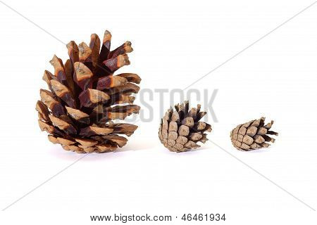 Three pine tree cones of various size isolated on white background