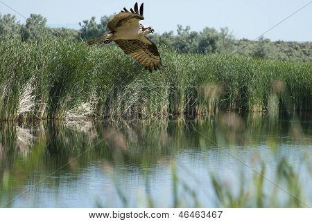 Jacht Osprey