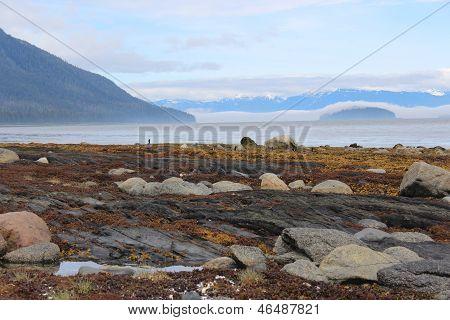 Beach Landscape at Petersburg Alaska